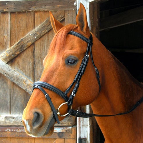 Exselle Elite Dressage Bridle Cob