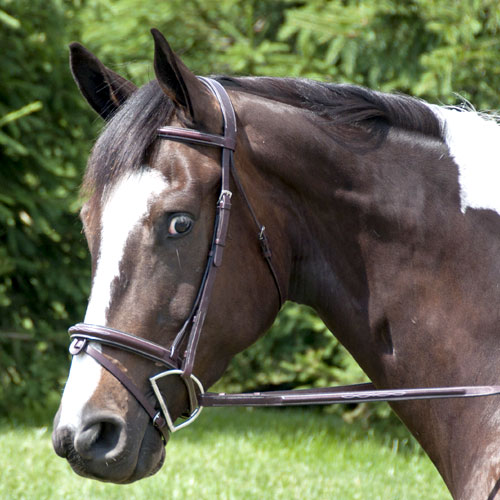 Exselle Elite Fancy Raised Padded Bridle Cob Dark Havana