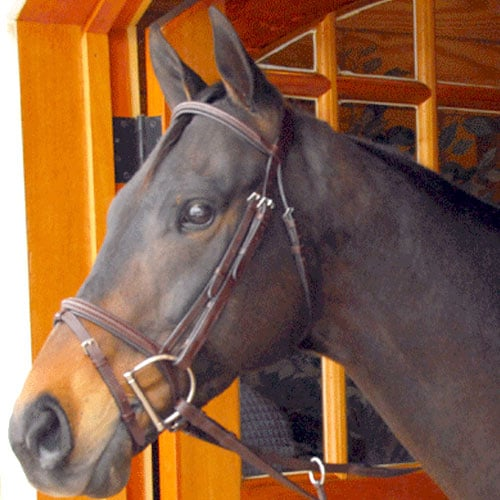 Exselle Elite Plain Raised Event Bridle Brown Cob
