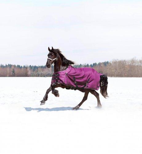 Horse Apparel