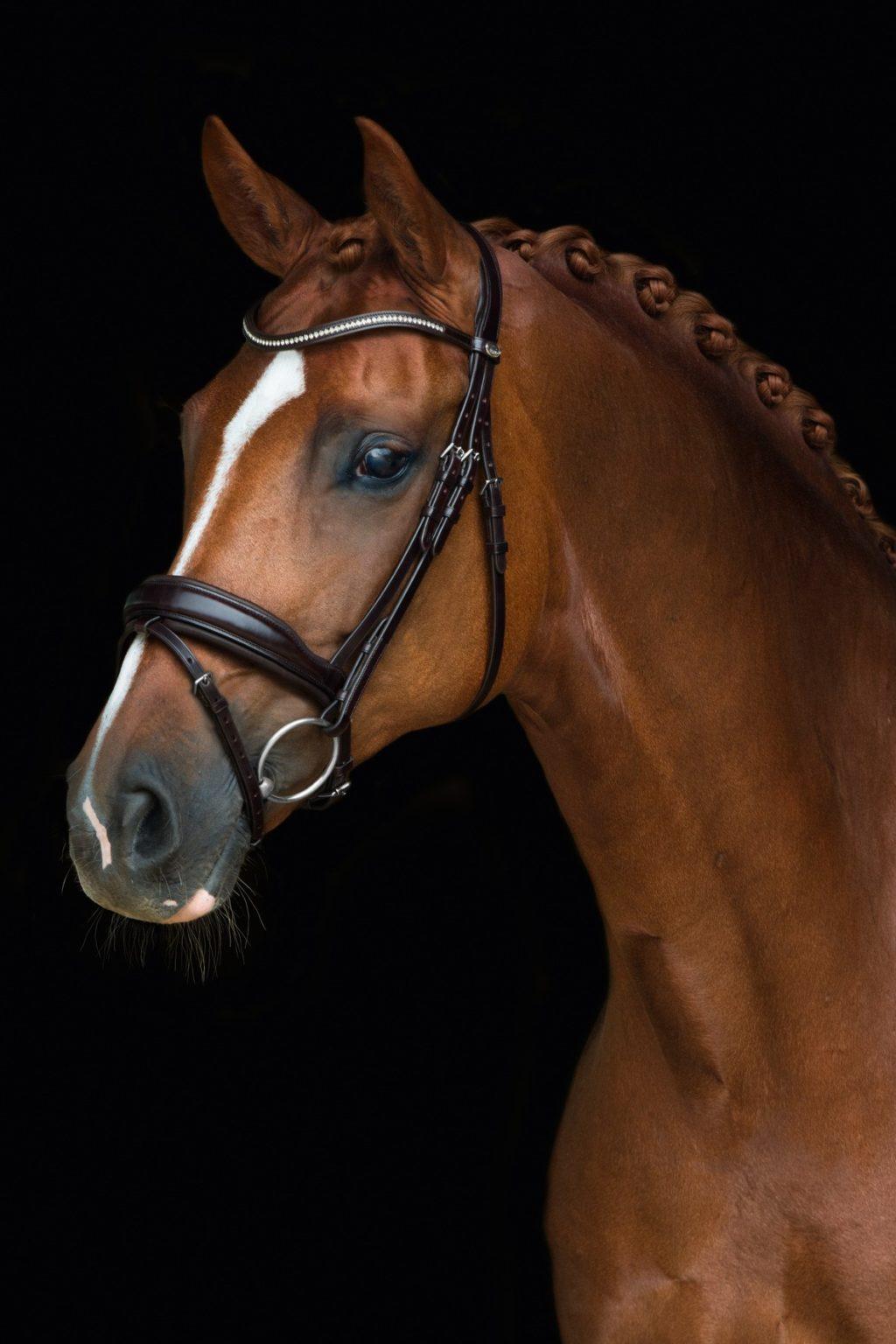English Horse Tack San Antonio Equestrian Riding Boots
