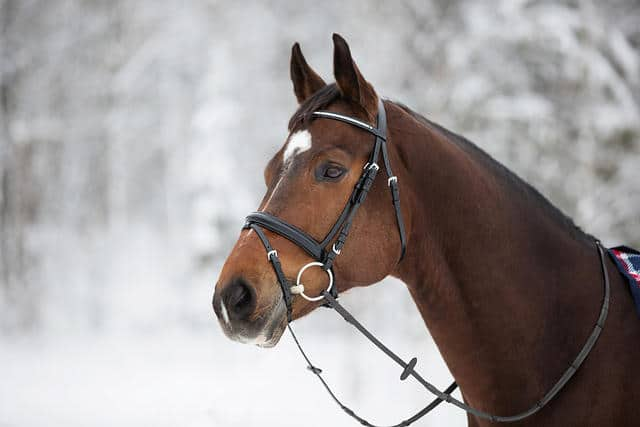 Snaffle Bridle with Crystal Noseband 2